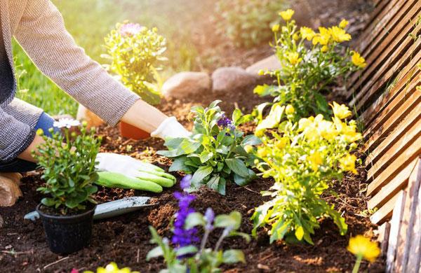 gardening-tips-for-beginners